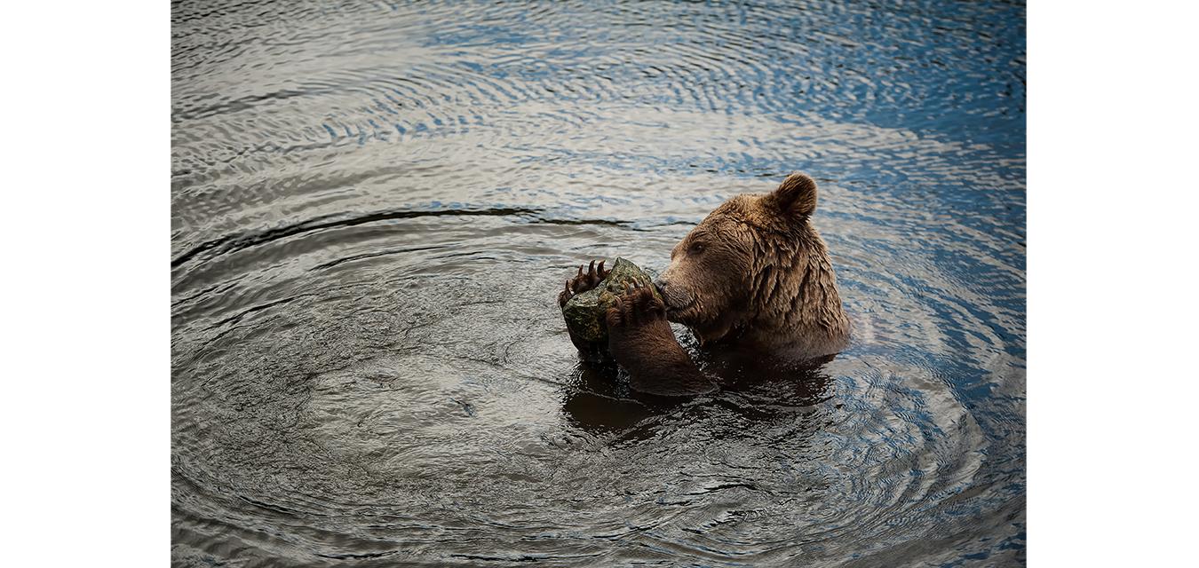bear-nature-naturephotography-wildlifephotography-animals-wildlife-amazing